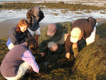 Digging Clams in Downeast Maine