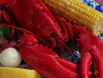 Beyond the Claw: So Much to Know About Maine Lobster!