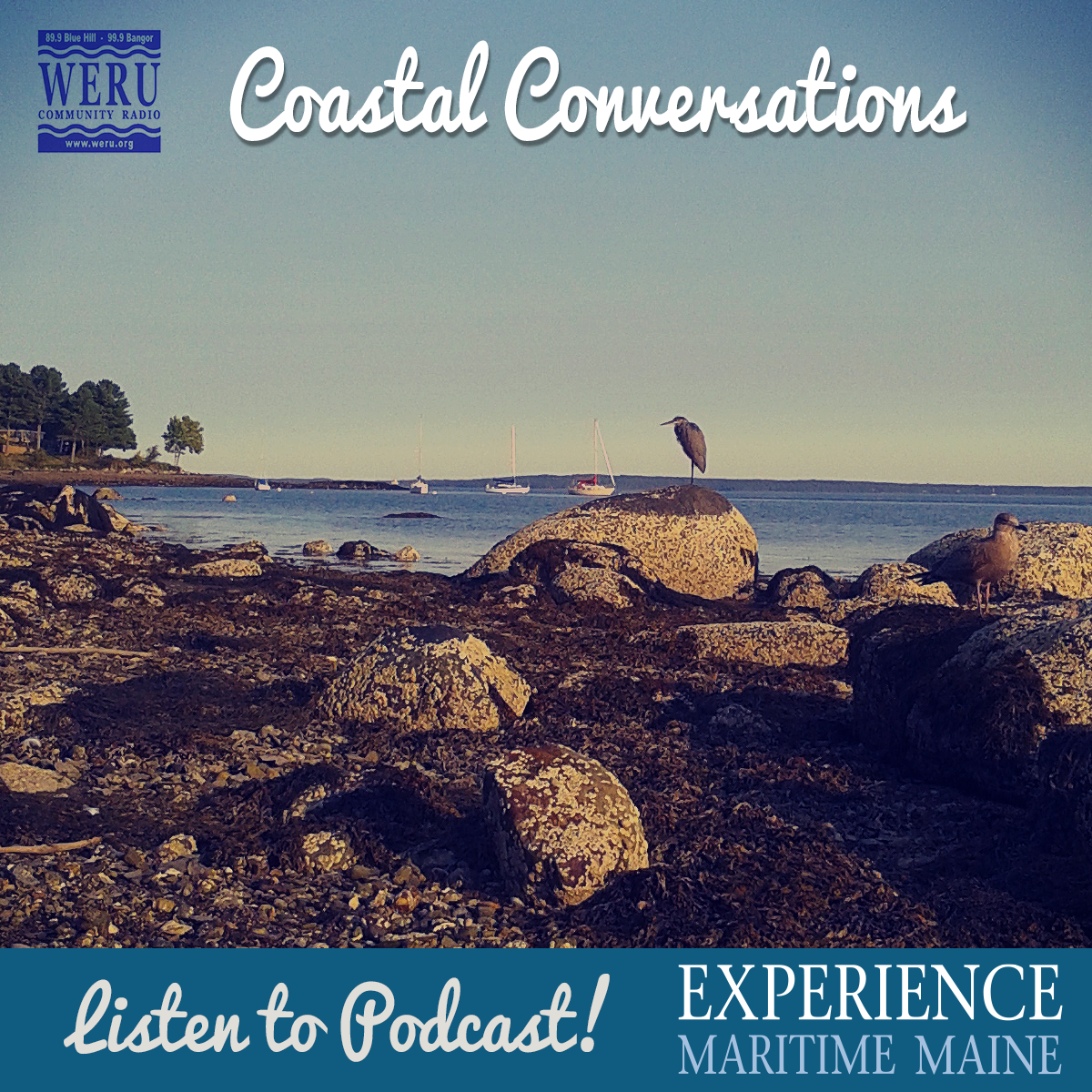 Coastal-Conversations-Seagull-Seabirds-Gulf-Maine