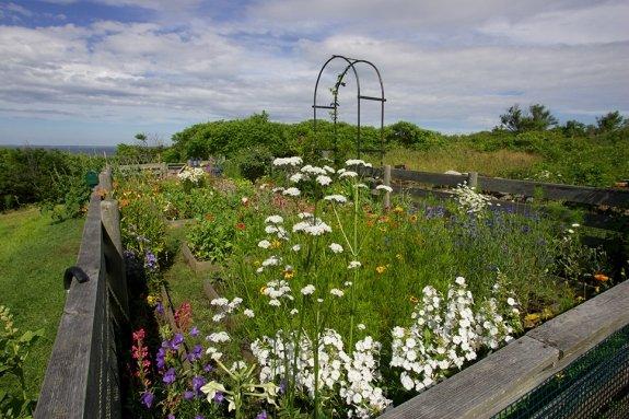 celia-thaxter-garden-peter-e-randall