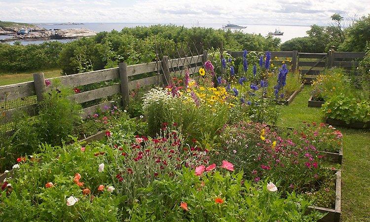 Celia Thaxter Island Garden