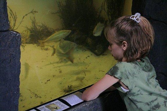 maine-state-aquarium-girl-reading-panel