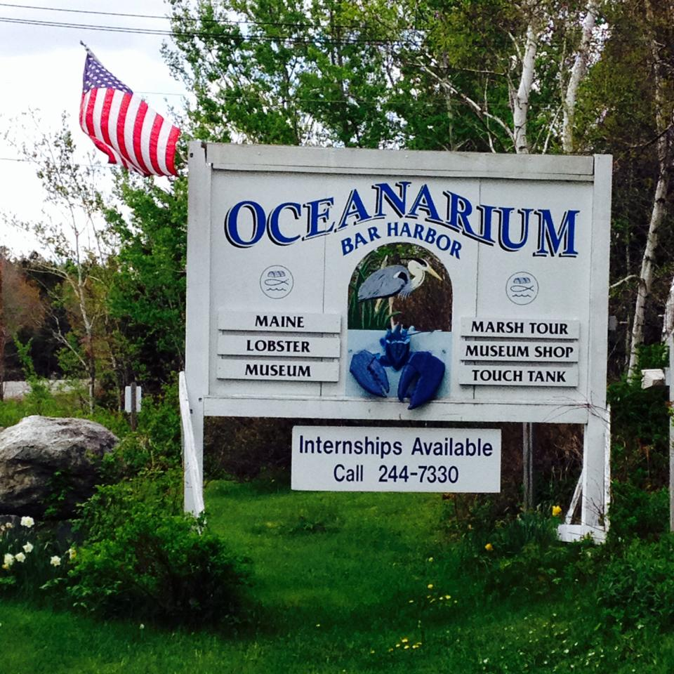 Mount Desert Oceanarium & Lobster Hatchery