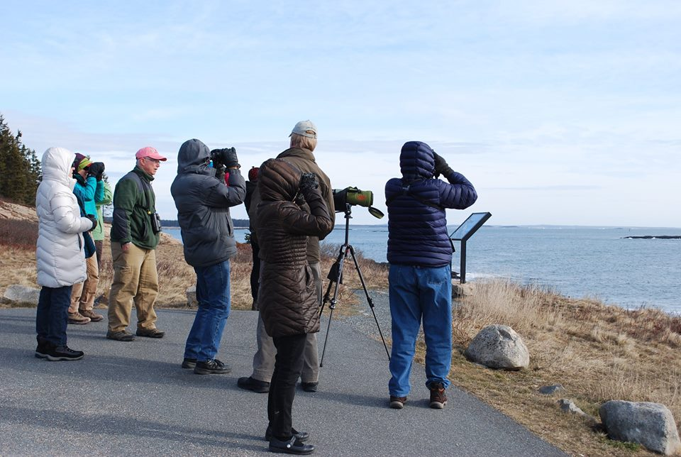 BIRD WATCHING IN ACADIA